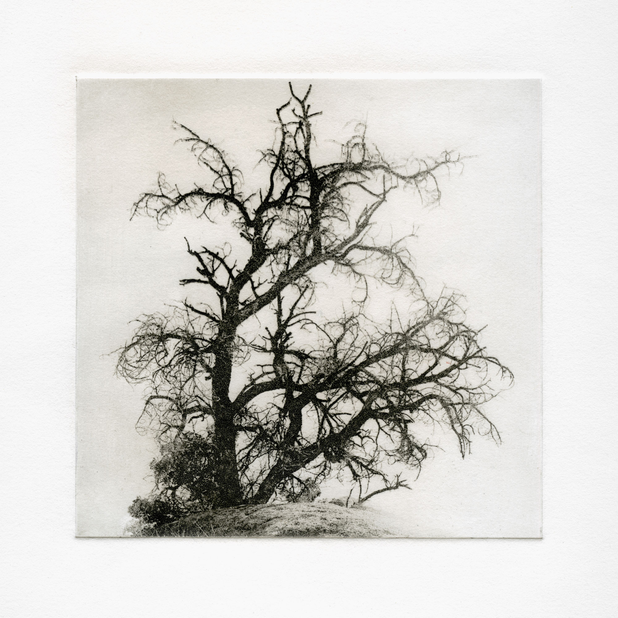 Legacy: Polymer Photogravure Etching by Alex Kay
